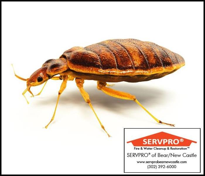 Identifying and Controlling Bed Bugs