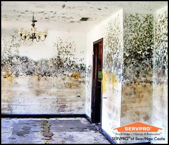 Mold Remediation Mold Remediation FAQ
