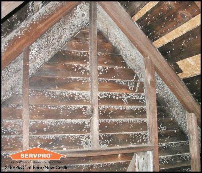 Mold Remediation How to Clean Up Attic Mold