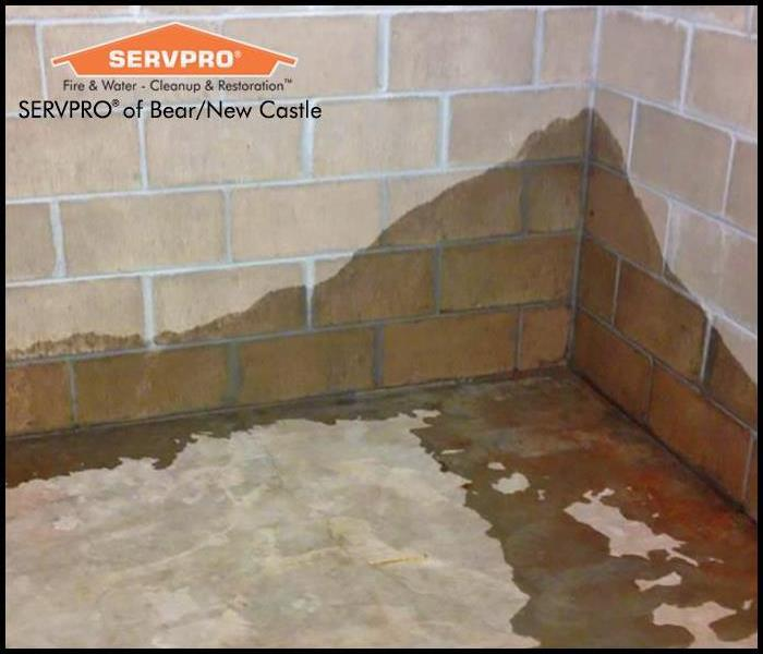 Water Damage Why Your Home Should Not Have a Wet Basement for Long