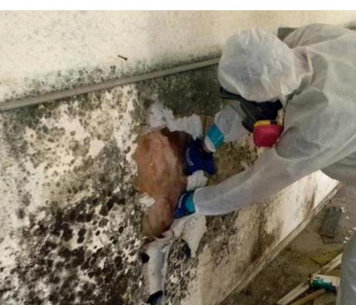 Mold Remediation When Your Humidity Problem Causes Mold Damage in Your Bear, DE Home